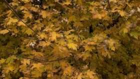 fall-leaves-landscape